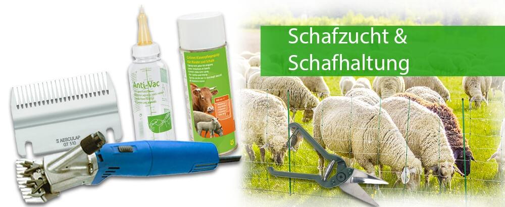 Schapen fokken & schapen landbouw