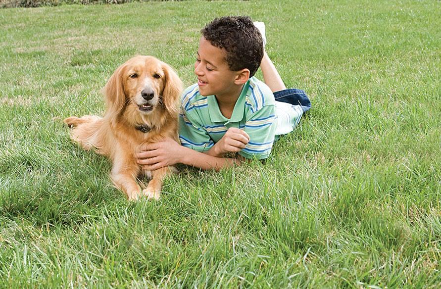 Petsafe en INNOTEK hond hek