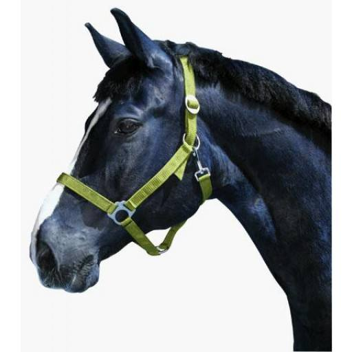 Halter of classic, sizes from 00 foal - 5 draft