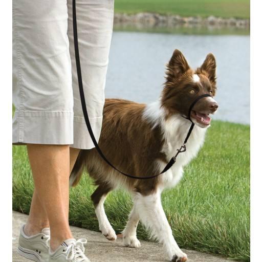 Easy walk™ head line 11 kg - 27 kg