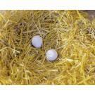 Plastic chicken eggs