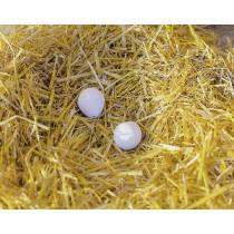 Plastic pigeon eggs