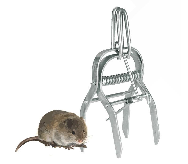 w hlmaus zangenfalle mit spanngriff volex gegen w hlm use. Black Bedroom Furniture Sets. Home Design Ideas